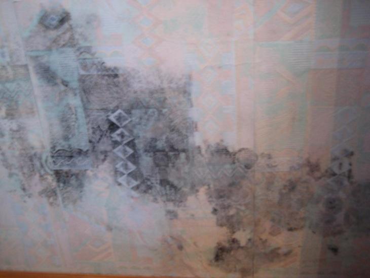 Плесень под обоями проявляется на стенах черными пятнами